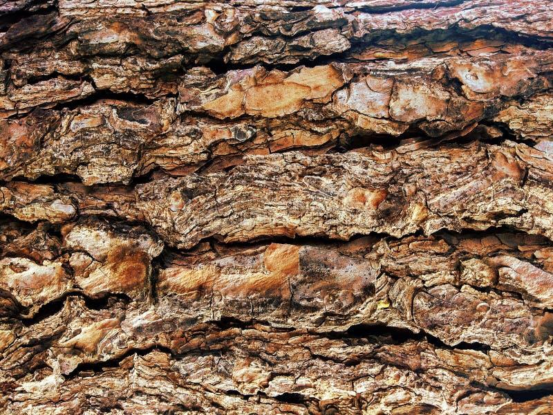 Une texture d'écorce de brun d'arbre photo libre de droits