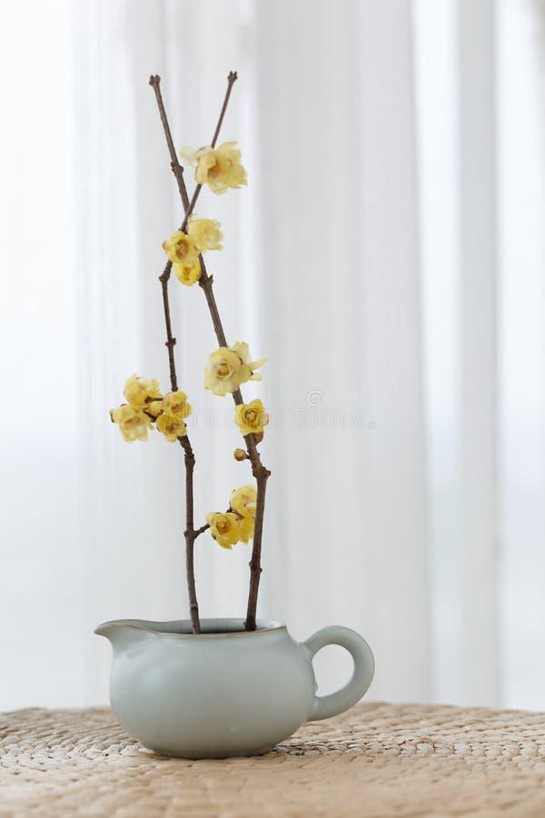 Une théière a inséré la fleur de deux wintersweet photographie stock libre de droits