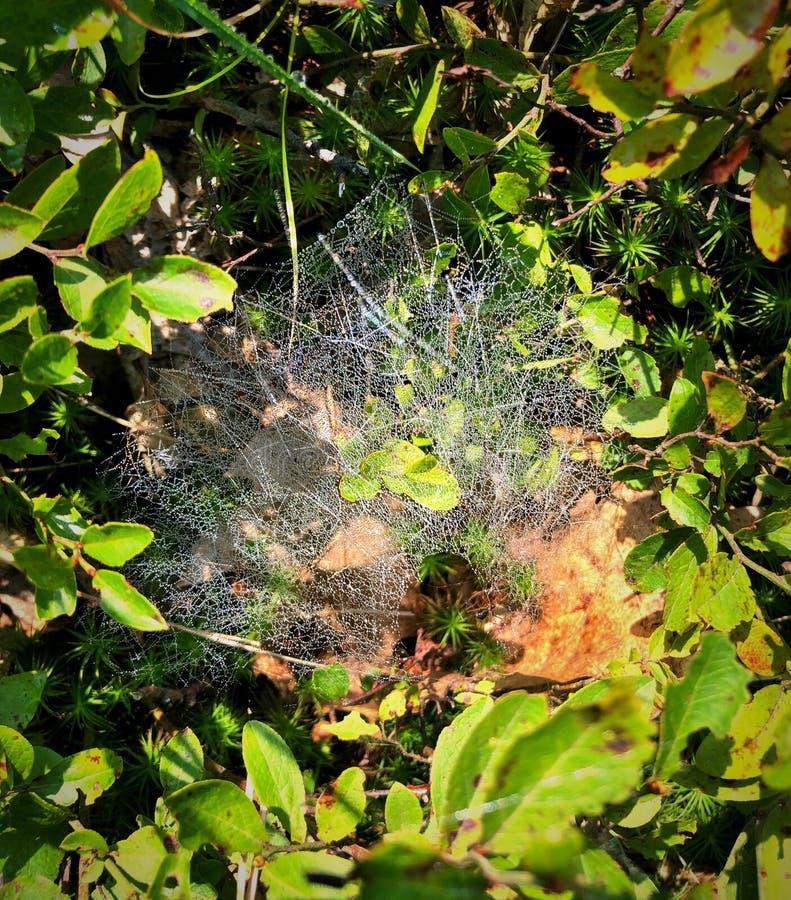 Une toile d'araignée sous la lumière du soleil photo stock