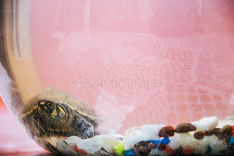 Une tortue de mer nageant sous l'eau photographie stock libre de droits