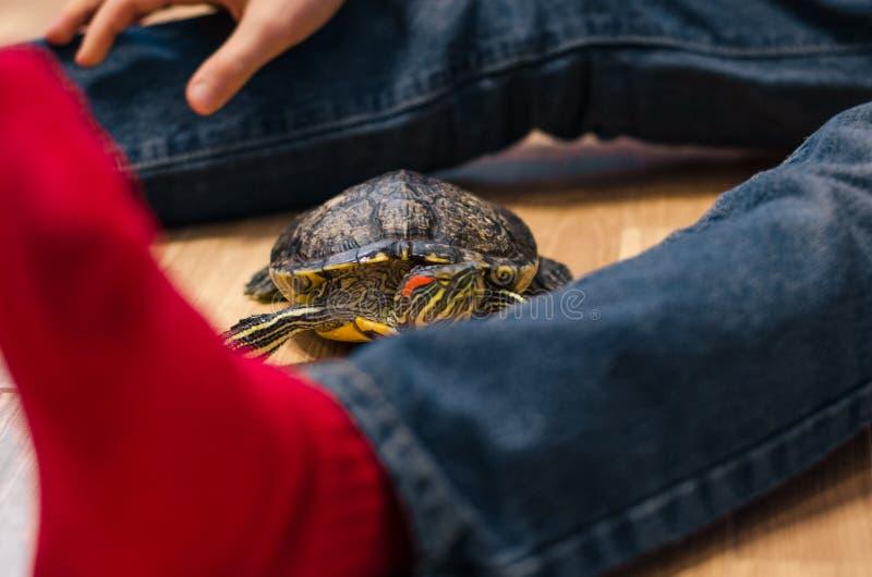 Une tortue sur le plancher à la maison photographie stock