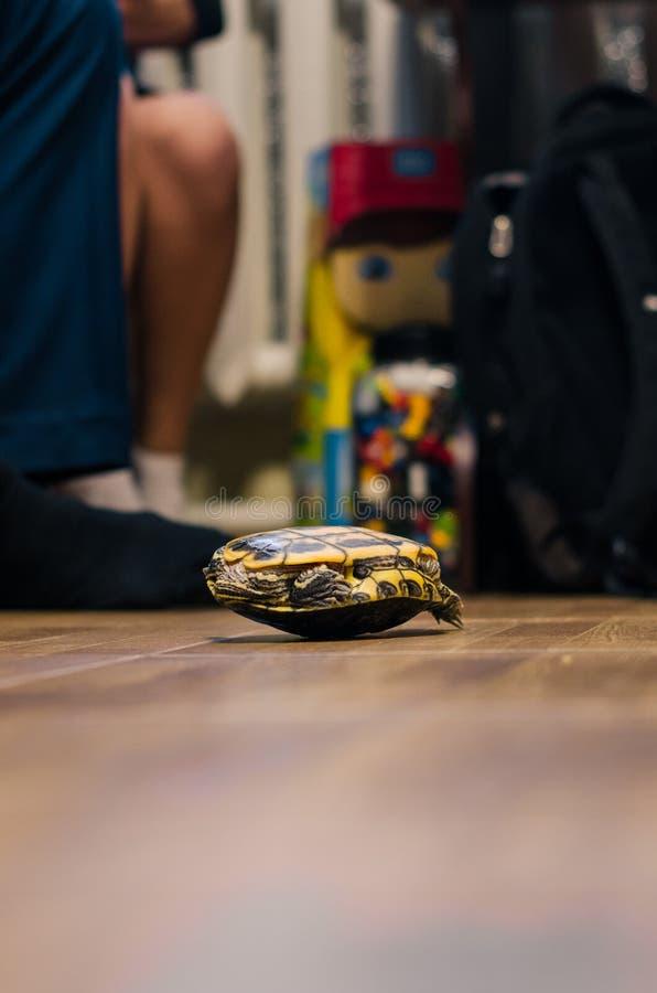 Une tortue sur le plancher ? la maison image stock