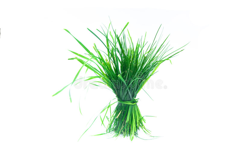 Une touffe d'herbe photos stock