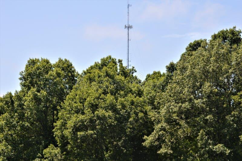 Une tour de communication poussant au-dessus des arbres image libre de droits