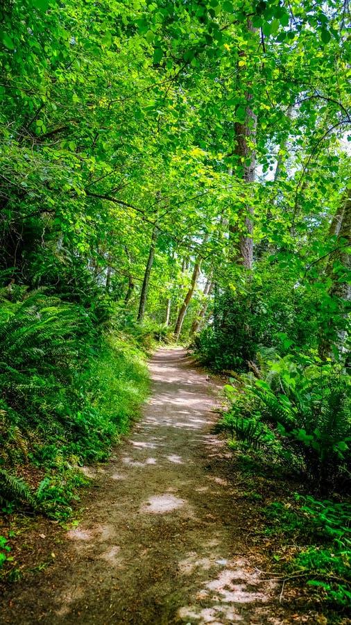 Une traînée dans la convoitise Forest Of Tolmie State Park pour la hausse et la marche merveilleuses image libre de droits