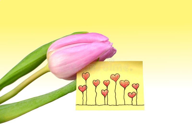 Une tulipe rose avec de belles salutations image stock