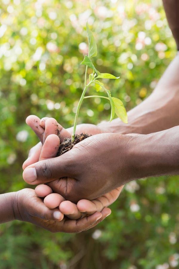 Download Une Usine D'homme Fleurs Avec Un Enfant Image stock - Image du seedling, stationnement: 56485299