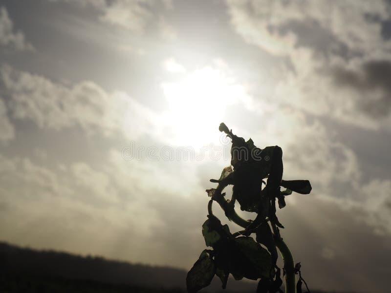 Une usine regardant au soleil photos libres de droits