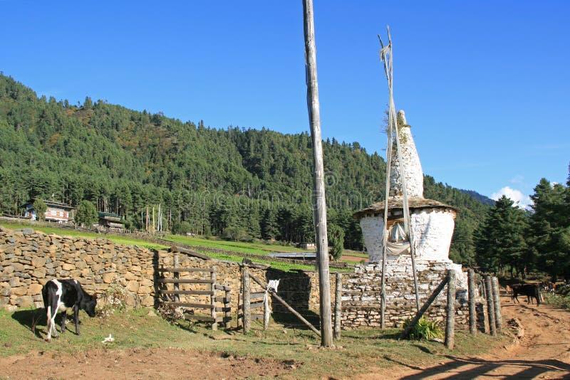 Une vache frôle près d'un chorten dans la campagne près de Gangtey, Bhutan photo stock