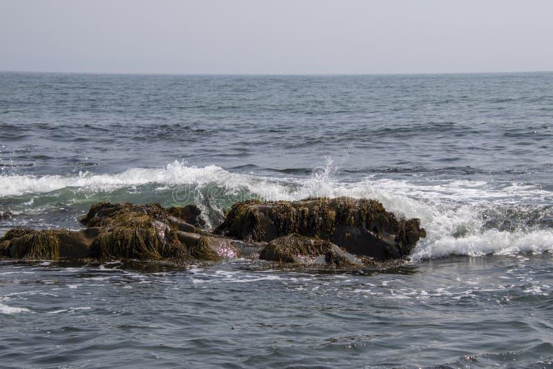 Une vague se cassant au-dessus d'une roche couverte par algue photos stock
