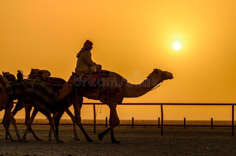 Une vie de désert photos stock
