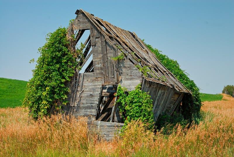 Une vieille grange de décomposition étant consommée par nature et usines s'élevantes photographie stock