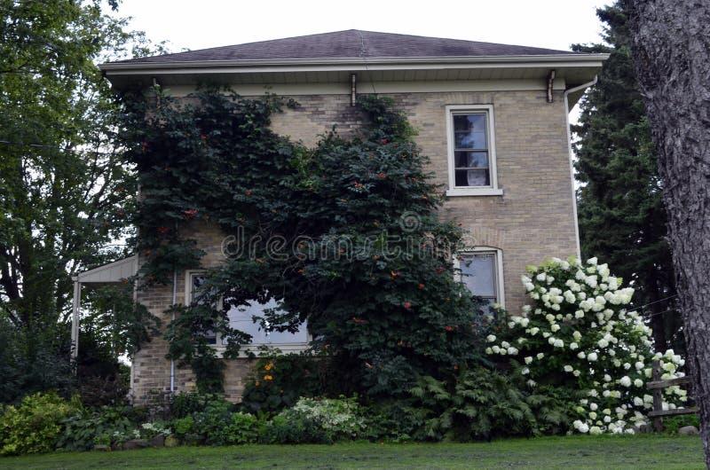 Une vieille maison renversante de brique avec les treilles merveilleuses ornant la pierre affrontent photo libre de droits