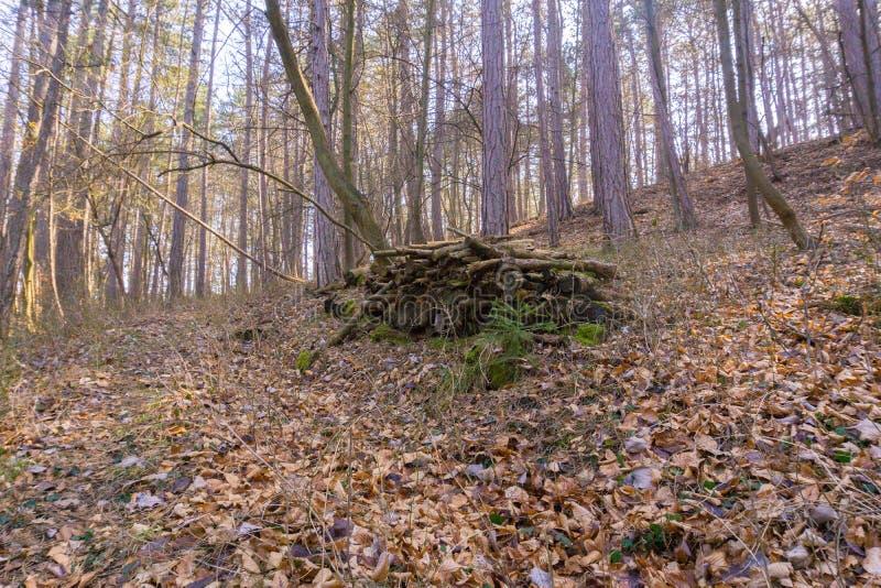 Une vieille pile avec des troncs dans les bois image stock