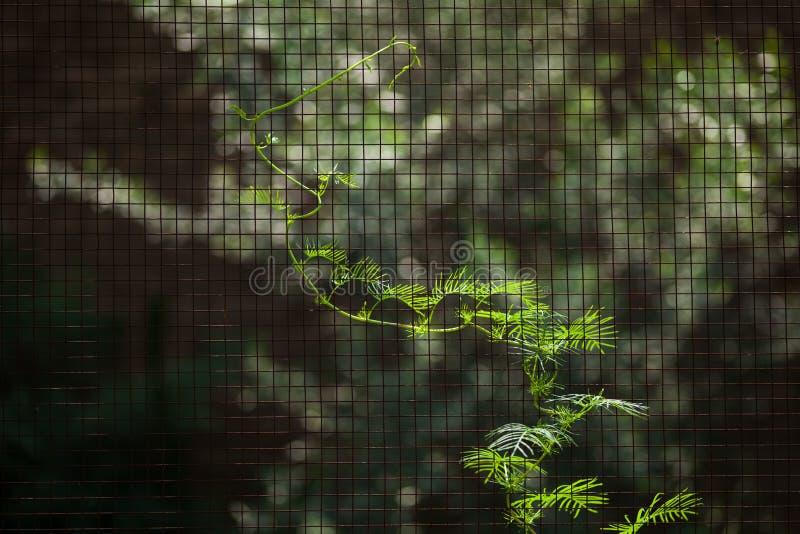 Une vigne à la clôture photographie stock