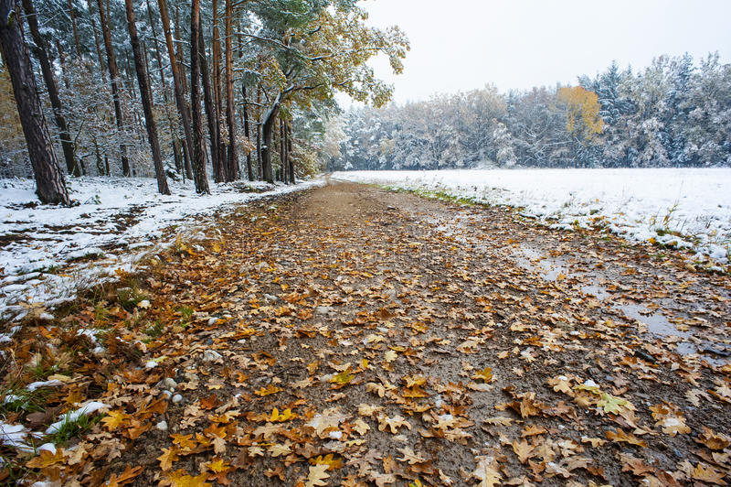 Une voie dans un bois d'automne images stock
