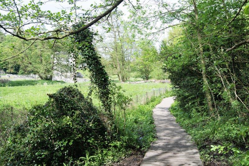 Une voie en retard de ressort à l'abbaye de Roche photo stock