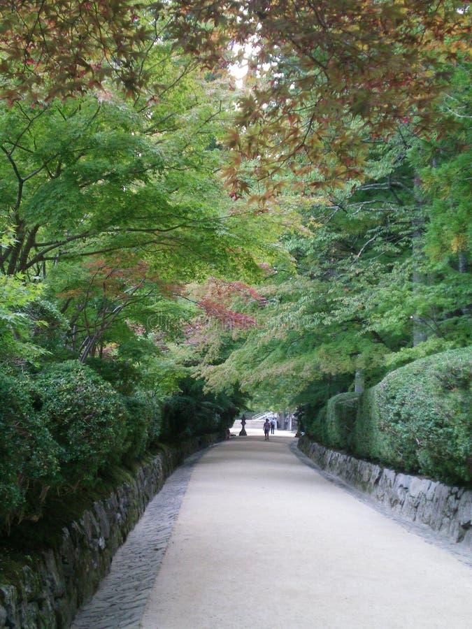 Une voie par les érables japonais images stock
