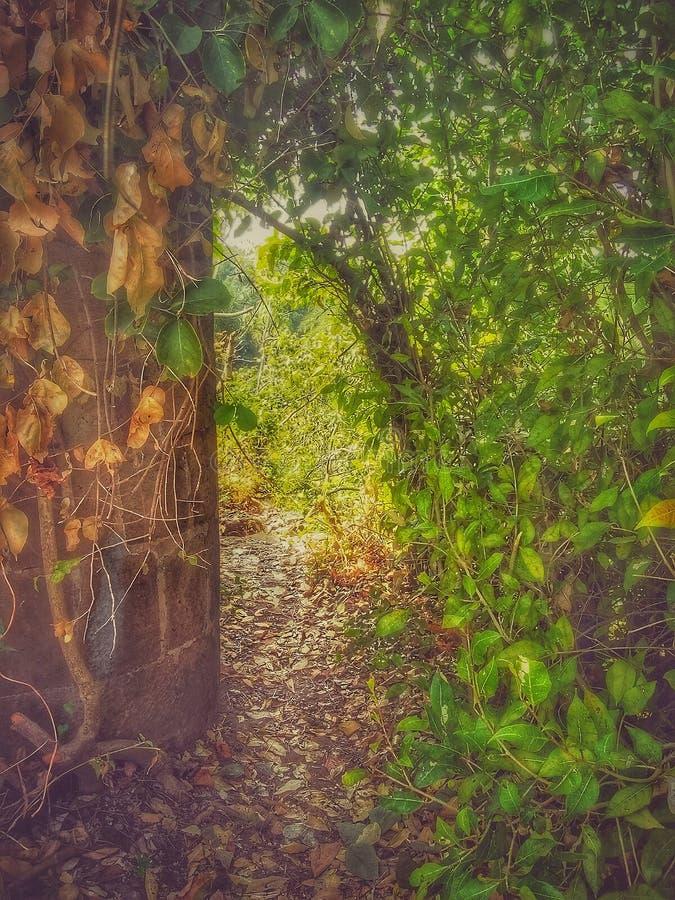 Une voie sur le bâtiment de fort dans le fort de Bassein dans l'Inde images libres de droits