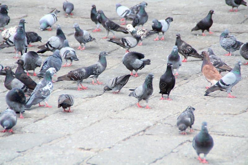 une volée d'oiseau photographie stock libre de droits