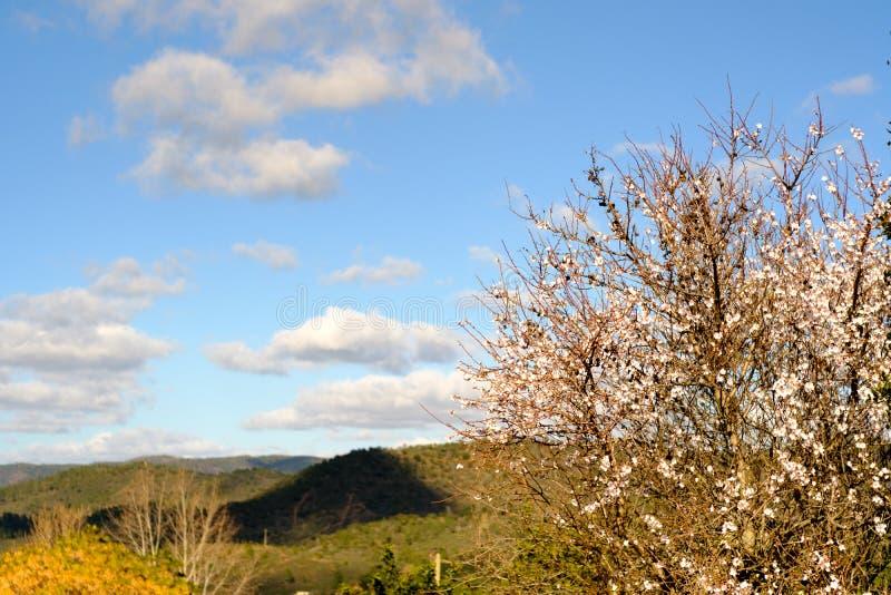Une vue étonnante dans Querença, Algarve photo stock