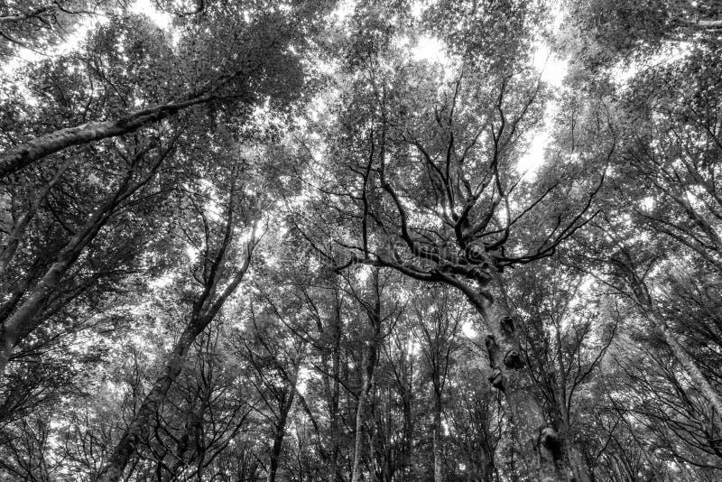 Une vue d'une forêt image stock