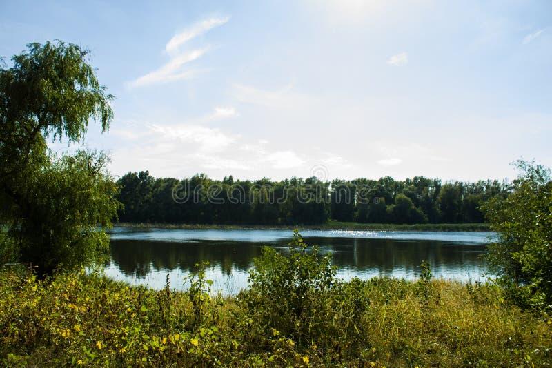 Une vue de lac dans les photos de parc image stock
