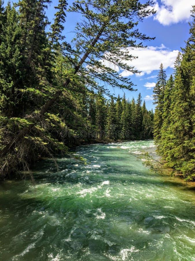 Une vue de plan rapproché des eaux de turquoise de la rivière d'Athabasca entourées par evergeen la forêt, le long de la tra image libre de droits