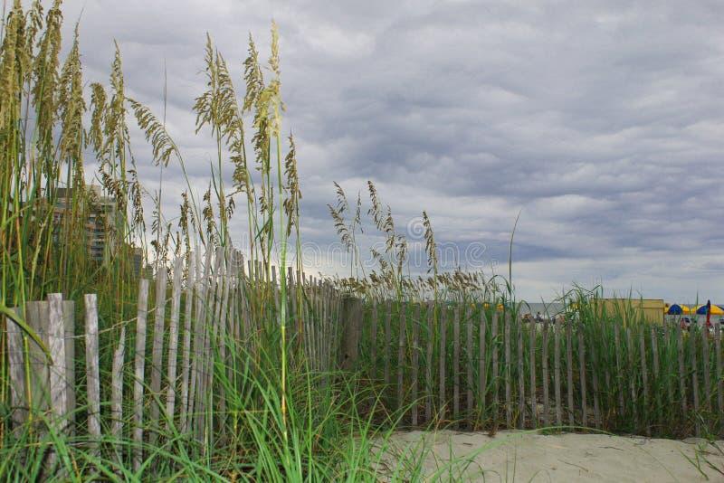 Une vue des dunes à la plage de Myrtlr image libre de droits