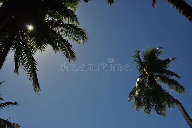 Une vue des palmiers et du ciel bleu photos libres de droits