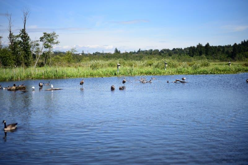 Une vue du parc régional de lac Burnaby photos libres de droits