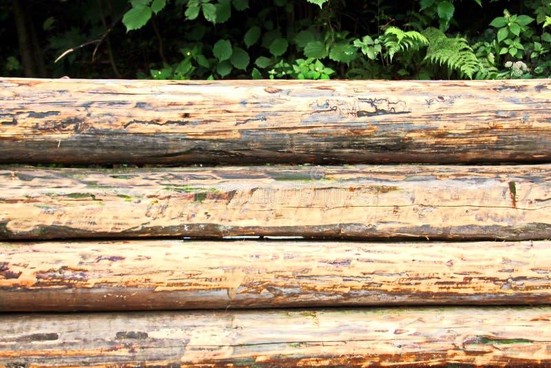 Une vue en gros plan des rondins de pin a empilé horizontalement et la structure d'un arbre coupé avec les anneaux concentriques image stock
