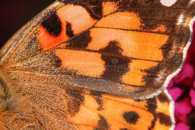 Une vue en gros plan sur une aile orange de papillon, texture gentille - macro tir photographie stock libre de droits