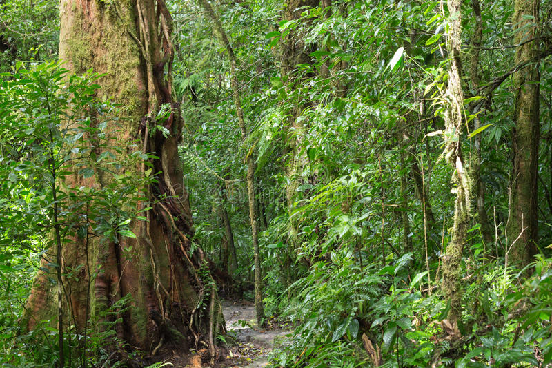 Une vue scénique de la jungle amazonienne image stock