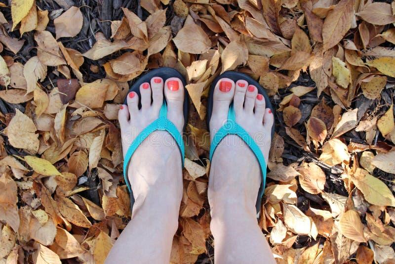 Une vue supérieure des pieds du ` un s de femme portant des bascules électroniques dans le feuillage d'automne photographie stock libre de droits