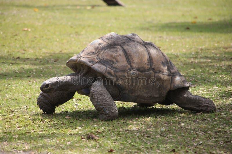 Une vue très étroite d'une tortue photo libre de droits