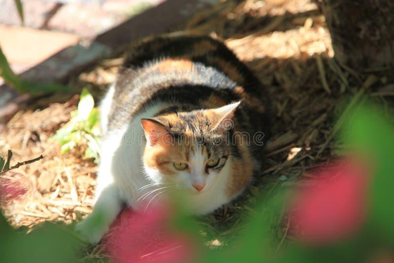 Une vue très étroite d'un gros chat image stock