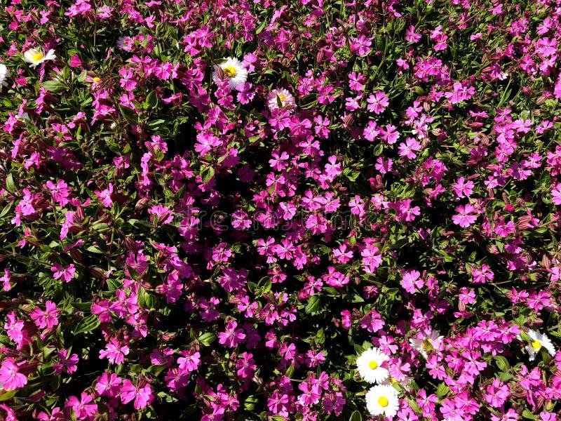 Une zone des fleurs color?es Parc de ville de couleurs naturelles image stock