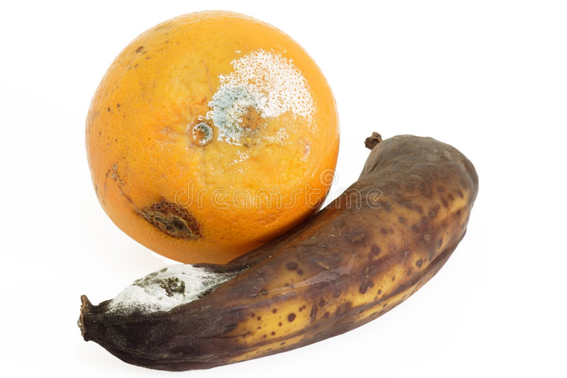 Uneatable. Mouldy fruit on bright background stock photography