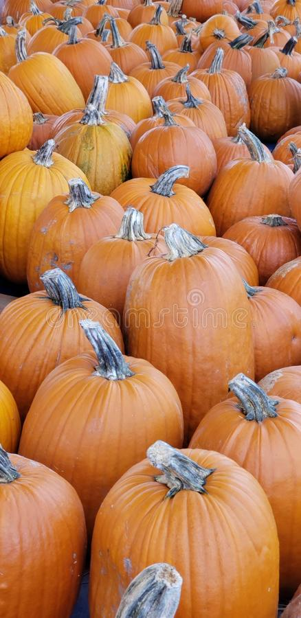 Unending pumpkins royalty free stock photo