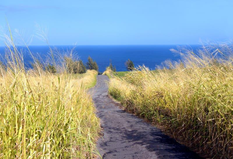 Unentwickeltes hawaiisches Land lizenzfreie stockfotos