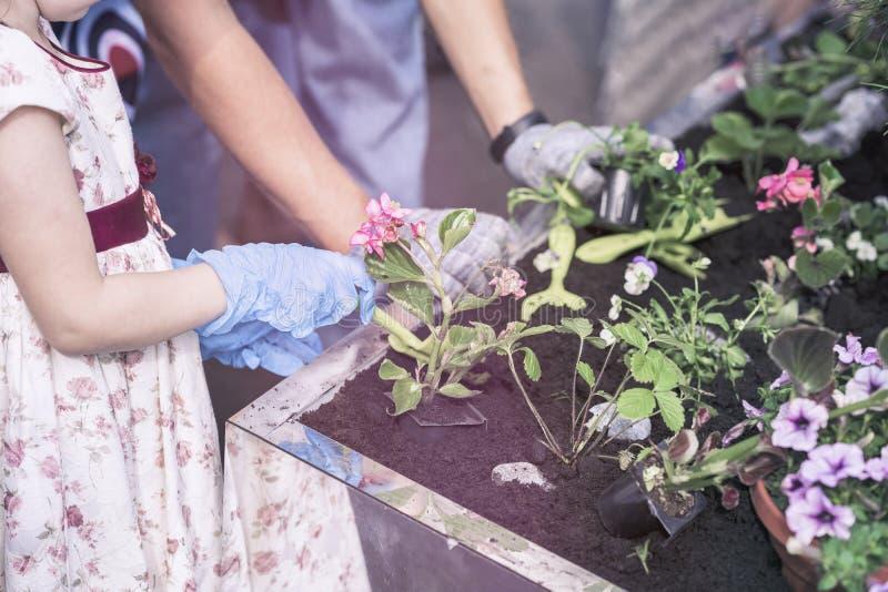 Unerkennbare Mutter- und Tochterbetriebsblumen, helfend, Frühlingsanlagen im Garten zu pflanzen Frühlingsgartenbau stockfotos
