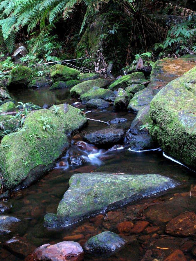 unesco национального парка гор Австралии голубой стоковые изображения rf