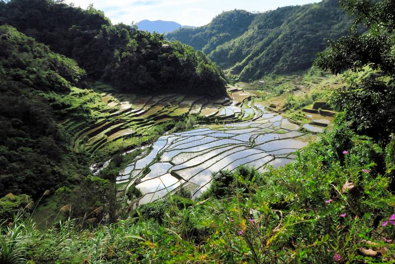 UNESCO-Reis-Terrassen in Bangaan, Philippinen lizenzfreie stockfotos
