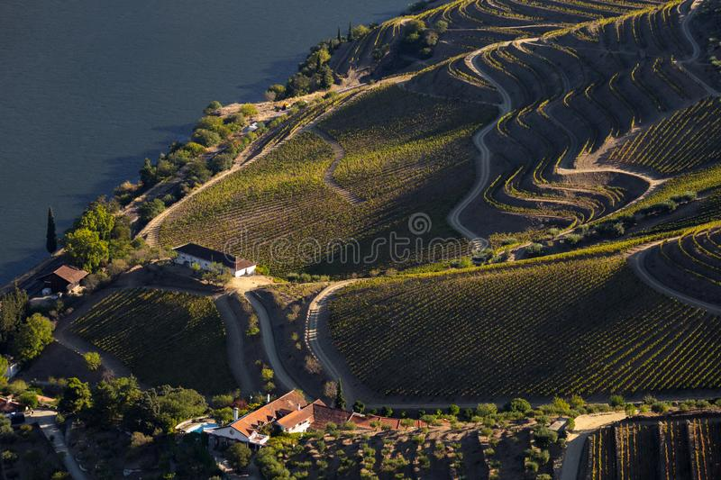 UNESCO World Heritage, the Douro Valley beautiful endless lines of Vineyards, in Sao Joao da Pesqueira, Viseu. UNESCO World Heritage, the Douro Valley beautiful royalty free stock image