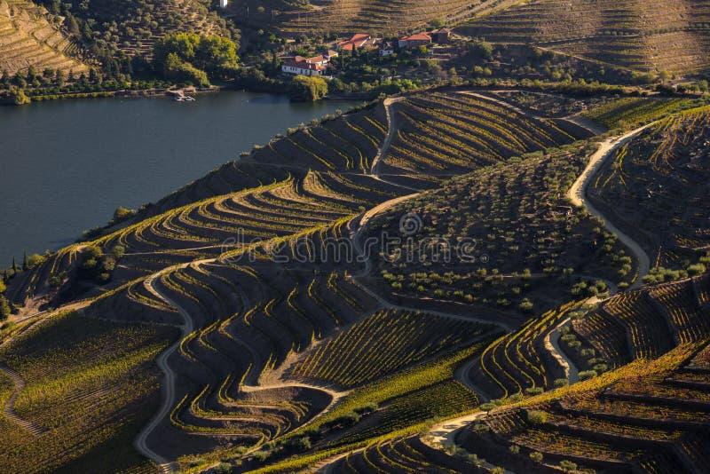 UNESCO World Heritage, the Douro Valley beautiful endless lines of Vineyards, in Sao Joao da Pesqueira, Viseu. UNESCO World Heritage, the Douro Valley beautiful royalty free stock photo
