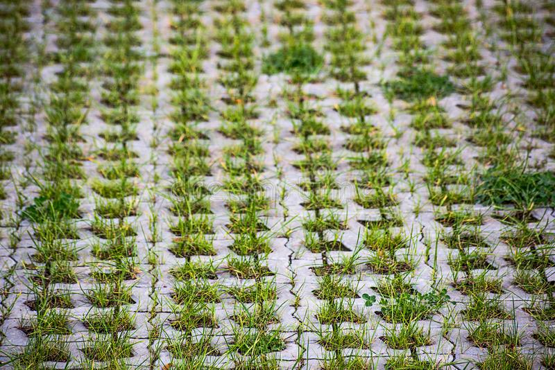 Uneven bunches of green grass grow in a pavement royalty free stock photo