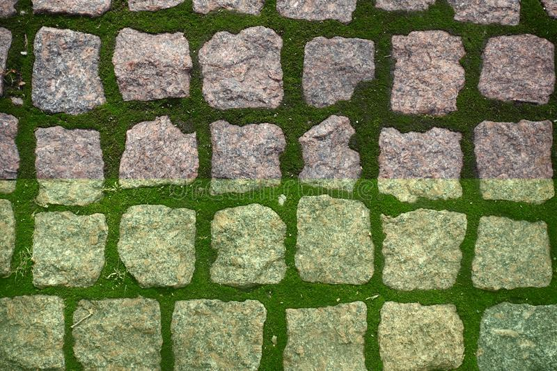 Uneven pink granite pavement with green moss in joints royalty free stock images