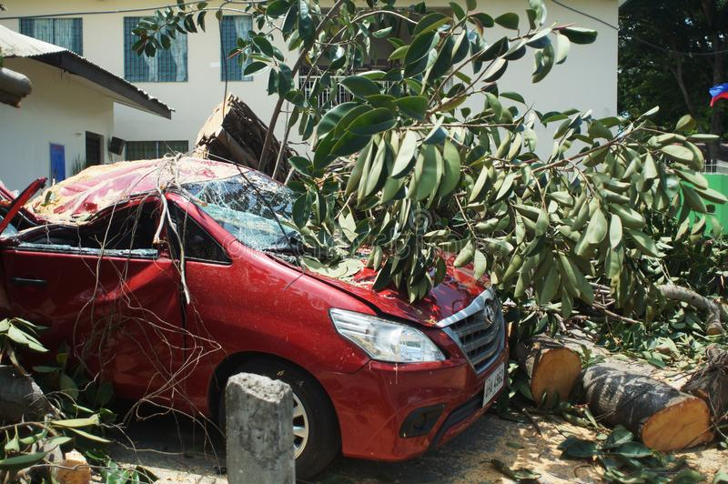 Unexpectedly a big rubber tree fell on a parked red car on a calm and sunny day. San Pablo City, Laguna, Philippines - June 11, 2016: Unexpectedly a big rubber royalty free stock photos