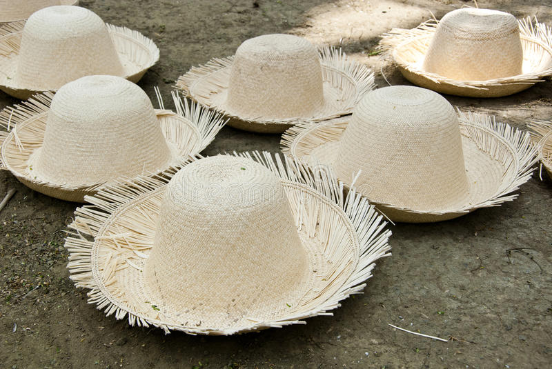 Download Unfinished Straw Hats stock photo. Image of montecristi - 43236460